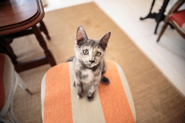 10 Einrichtungsideen Die Katzen Glucklich Machen