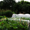 Food and Community Thrive in a U.K. Allotment Garden