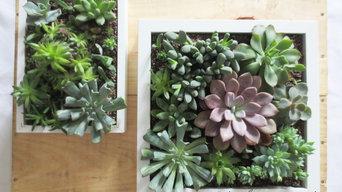 Succulent Green Wall