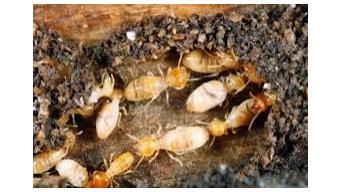 Termite Inspection Gold Coast