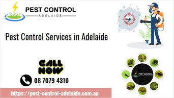 Pest Control Services in Bellara, QLD