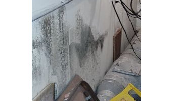 Mold Remediation in Palm Harbor, FL