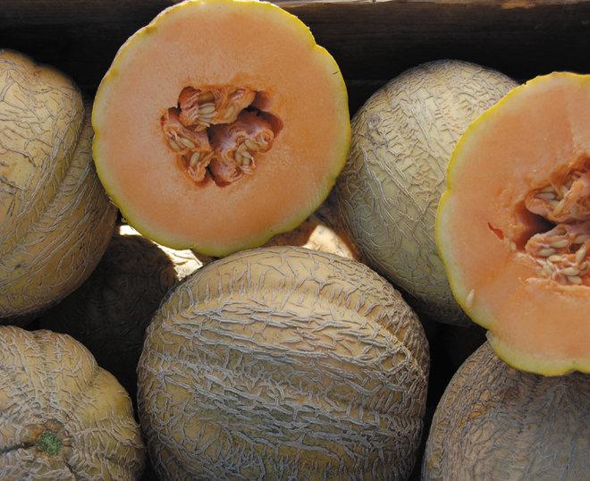 Melon_Schoons.jpg