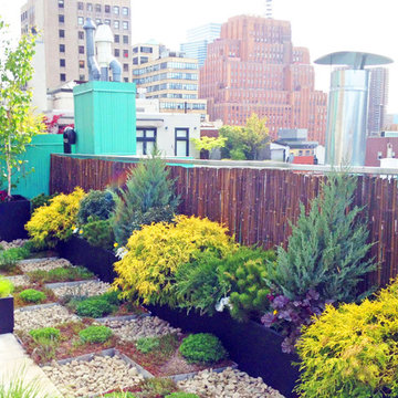 NYC Roof Garden: Paver Deck, Terrace, Sedum Trays, Bamboo Fence, Container Plant