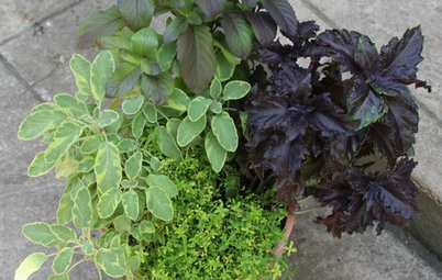 8 Easy Container Plants to Grow From Seed