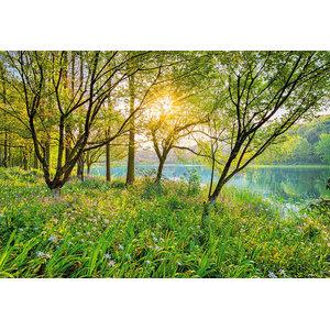 Spring Lakeside Trees Photo Wall Mural, 368x254 cm
