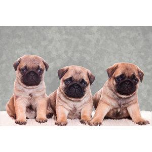 Pug Puppies Gallery Door Mat, Large