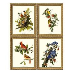 Audubon Bird Print Set-4 Framed Antique Vintage Illustrations, Gold Frame, 8x10