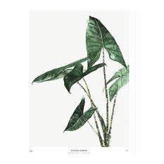 """Botanic Print, """"Alocasia"""", Medium, 40 x 50 cm"""