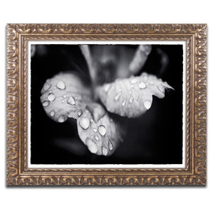 Pipa Fine Art Raindrops On Wild Rose Color Ornate Framed Art Traditional Prints And Posters By Trademark Global