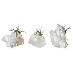Eclectic Plants by EarthSeaWarrior