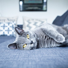 10 Cats Who Match Their Interiors