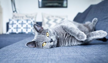 10 Cats Who Remarkably Match Their Interiors
