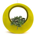 The Circle Pot by Potted, Chartreuse