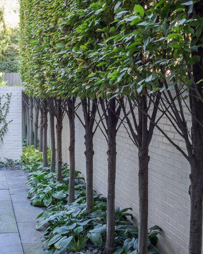 Tiered Contemporary Urban Garden: Contemporary Urban Garden