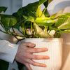 Eksperter: Sådan får du succes med efterårets planter indendørs