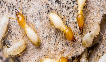 Masters Pest Control Brisbane