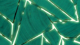 Shattered Light Wallpaper in Green by Brent Comber for Rollout