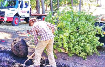 Как правильно: Пересадить взрослые деревья и кустарники