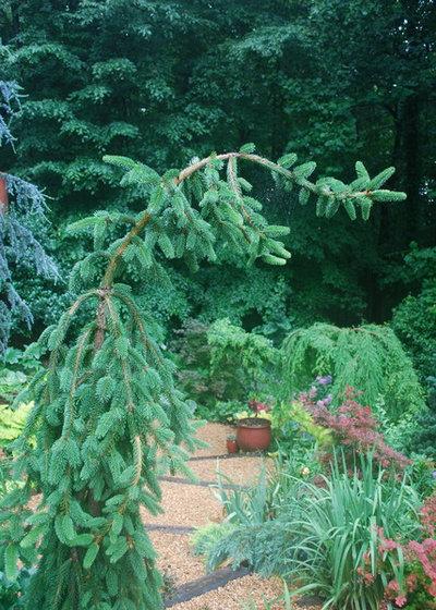 by Jay Sifford Garden Design