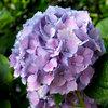 8 flores y plantas perfectas para el jardín