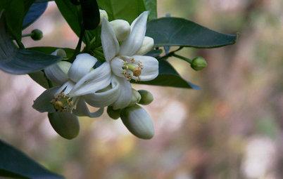 Esistono Almeno 13 Alberi da Frutta con Fiori Meravigliosi