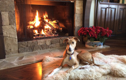 30 Dogs and Cats Cozying Up for the Holidays