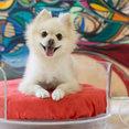 Pet Lounge Studios's profile photo
