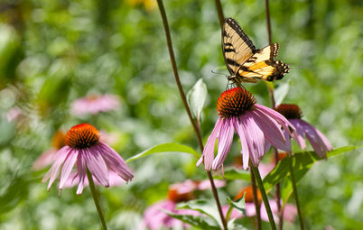 Entice Eastern Tiger Swallowtails With Summer Flowers