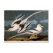'Tropic Bird' Canvas Art by John James Audubon
