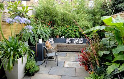 Jardín de la semana: Un patio gris transformado en oasis tropical