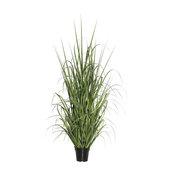 """Vickerman 60"""" Green Ryegrass in Pot"""