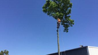 Large Tree Removal Brisbane