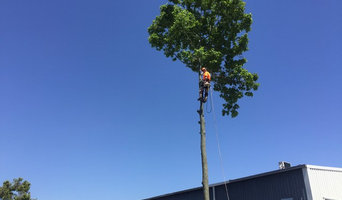 Large Tree Removal Brisbane