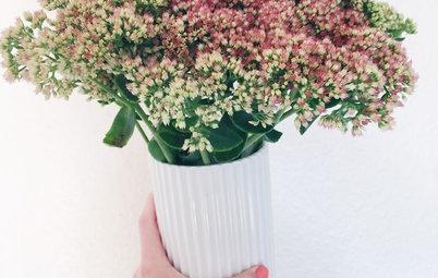 6 blommor och kvistar som håller länge