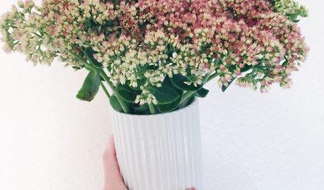 6 grene og blomster der ikke visner med det samme
