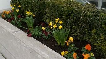 A bit of soft, warm spring colour to concrete environment