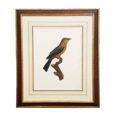 Consigned Framed Antique Print of Bird by Barraband With French Matting, C. 1806