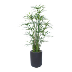 6' Papyrus With Grass and Bamboo in a Black Fiberstone Planter
