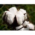 Cotton Construction Inc's profile photo