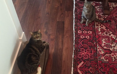 Pet of the Week: Good Times With Tonks and Lupin