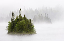 Trees in the Mist by Mike Grandmaison, Limited Edition, Photograph