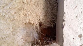 Redlands Pet Damage Before