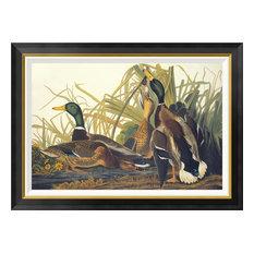 """""""Mallard Duck"""" Framed Canvas Giclee by John James Audubon, 36x26"""""""