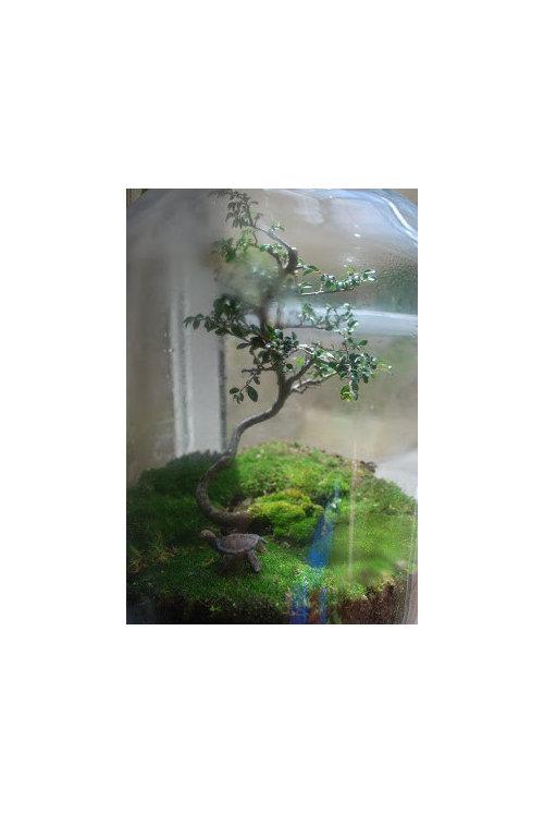 Mini Tree Terrarium Help