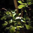 Botanical Lighting.com's profile photo