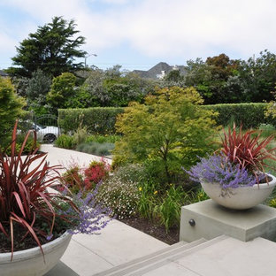 Photo of a contemporary front yard landscaping in San Francisco for fall.