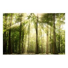 """Sun Rays Through Treetops"" Landscape Photo Unframed Wall Art Print, 20""x24"""