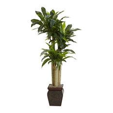 "4 5"" Cornstalk Draceana With Vase, Real Touch"