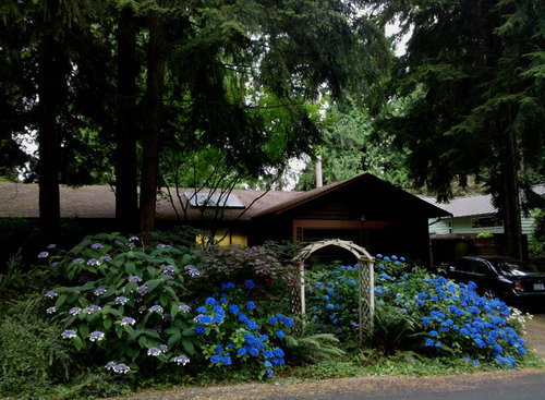 Suggestions for hydrangea treatments to darken leaves and